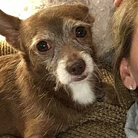 Adopt A Pet :: Sammi - Sharon Center, OH