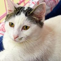 Adopt A Pet :: Daniel W - St. Paul, MN