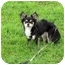 Photo 3 - Chihuahua Dog for adoption in Ile-Perrot, Quebec - Sushi