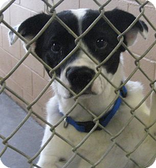 Border Collie Mix Dog for adoption in Newberry, South Carolina - Bruce