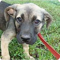 Adopt A Pet :: Osbourn - Plainfield, CT