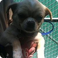 Adopt A Pet :: Candy - Poway, CA