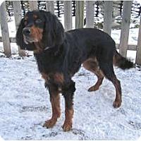 Adopt A Pet :: Nola - DeKalb, IL