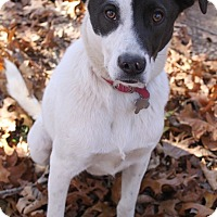Adopt A Pet :: Skeeter - Oakland, AR