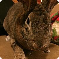 Adopt A Pet :: Mantle - Williston, FL