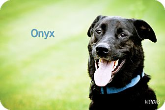 Labrador Retriever Mix Dog for adoption in Lisbon, Iowa - Onyx