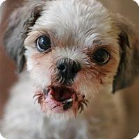 Adopt A Pet :: Betsy - Canoga Park, CA