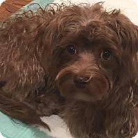 Adopt A Pet :: Dancer - Temecula, CA