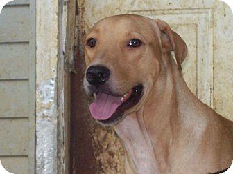 Labrador Retriever Mix Dog for adoption in Derry, New Hampshire - Spencer