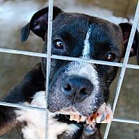 Adopt A Pet :: Jersey - Odessa, TX