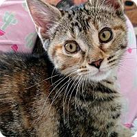 Adopt A Pet :: Electra - Winston-Salem, NC