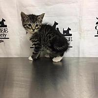 Adopt A Pet :: Grape Soda - Waycross, GA