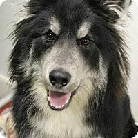 Adopt A Pet :: Macho - Dunkirk, NY