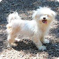 Adopt A Pet :: NANI - Wainscott, NY