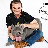 Adopt A Pet :: Handsome Cowboy Dallas - Burbank, CA