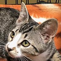 Adopt A Pet :: Kambucha - Auburn, CA