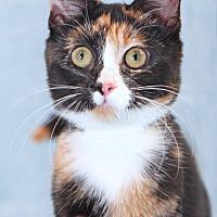 Adopt A Pet :: Luna - Encinitas, CA