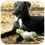 Photo 1 - Labrador Retriever Mix Dog for adoption in Hamburg, Pennsylvania - ELVIS