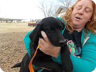 Labrador Retriever Mix Puppy for adoption in East Hartford, Connecticut - Raven ADOPTION PENDING
