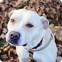 Adopt A Pet :: Kate - Chicago, IL