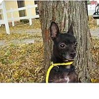 Adopt A Pet :: Rhea - Madison, WI