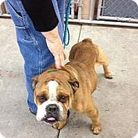 Adopt A Pet :: Fred - Winder, GA