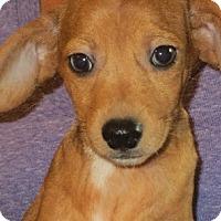 Adopt A Pet :: Mateo - Salem, NH