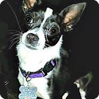 Adopt A Pet :: Birdie - West Allis, WI