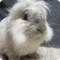 Adopt A Pet :: Ziggy - Newport, DE