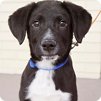 Adopt A Pet :: Lego - Hagerstown, MD