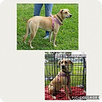 Adopt A Pet :: Goldie - Homestead, FL