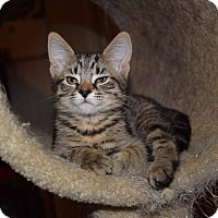 Adopt A Pet :: Mary - Oxford, CT