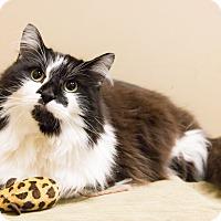 Adopt A Pet :: Bandito - Chicago, IL