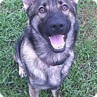 Adopt A Pet :: Chase - Ormond Beach, FL