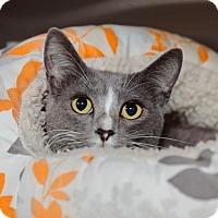 Adopt A Pet :: Kayla - Mission Hills, CA
