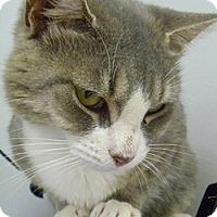 Adopt A Pet :: Patricia - Hamburg, NY