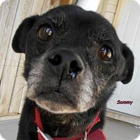 Adopt A Pet :: Sammy - Oskaloosa, IA