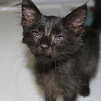 Adopt A Pet :: Katrina - Cuero, TX
