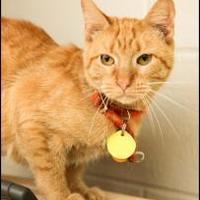 Adopt A Pet :: Momma - Garland, TX