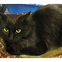 Adopt A Pet :: SAMMIE - Diamond Bar, CA