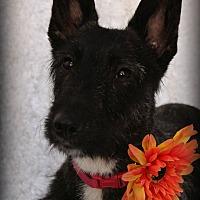 Adopt A Pet :: Thelma - Omaha, NE