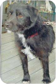 Terrier (Unknown Type, Small) Mix Dog for adoption in Old Bridge, New Jersey - Terry