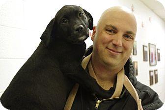 Labrador Retriever Mix Puppy for adoption in Elyria, Ohio - Simon