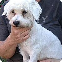 Adopt A Pet :: Stevie - Fort Lauderdale, FL
