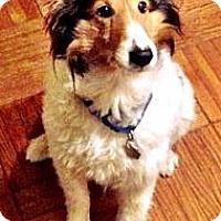 Adopt A Pet :: Jordy - Charlottesville, VA