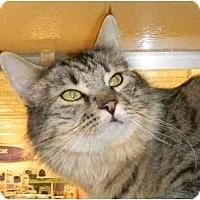 Adopt A Pet :: Gypsy - Howell, NJ
