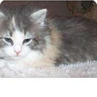 Adopt A Pet :: Fro - Acme, PA