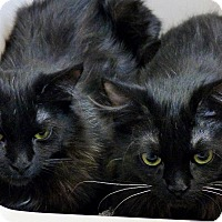 Adopt A Pet :: Tribble & Trouble - Victor, NY