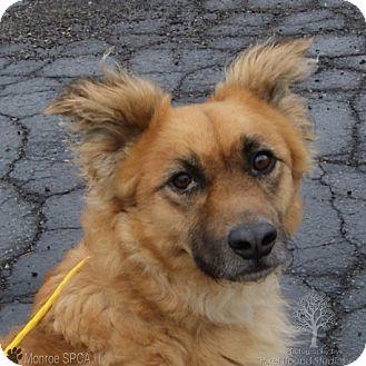 Dutch Shepherd Mix Dog for adoption in Monroe, Michigan - Linus - Rescued