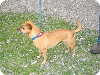 Terrier (Unknown Type, Medium) Mix Dog for adoption in Orland, California - Issy